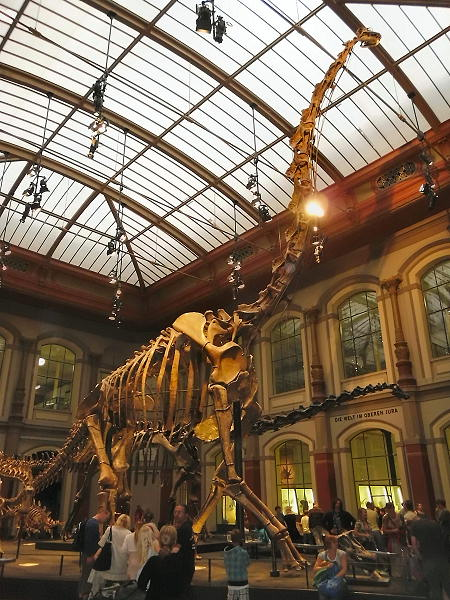 Ein Besuch im Museum für Naturkunde in Berlin