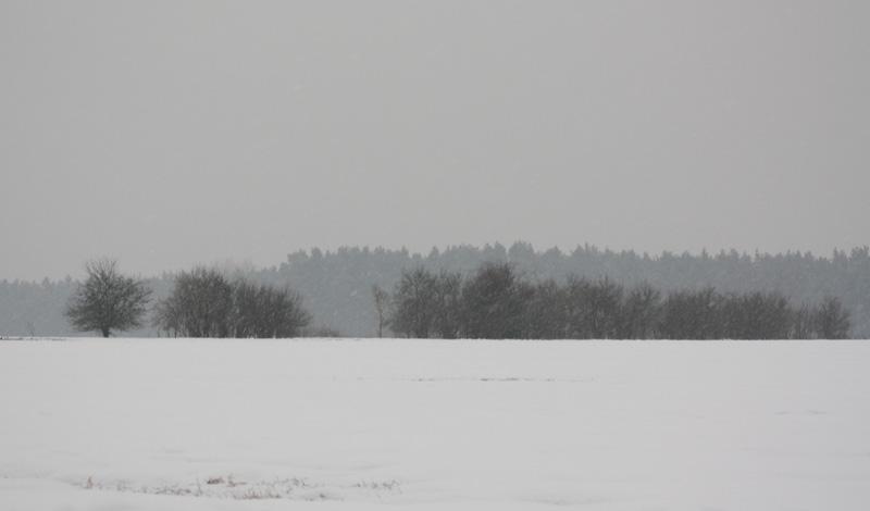 SoFi in Grau