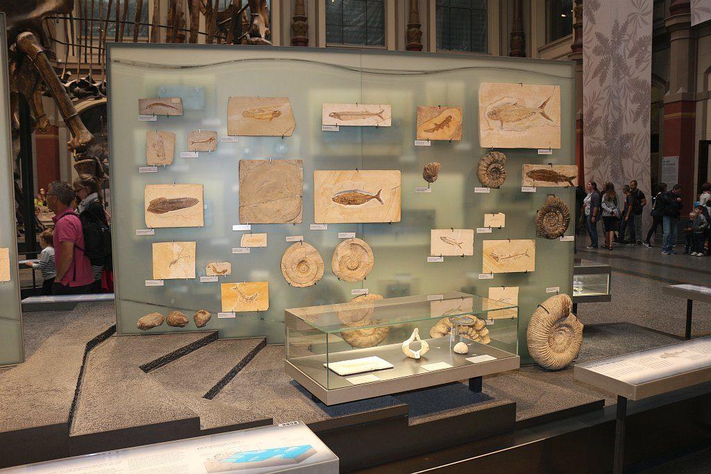 Fische, Amphibien, Ammoniten und Krebse aus dem Solnhofener Plattenkalken