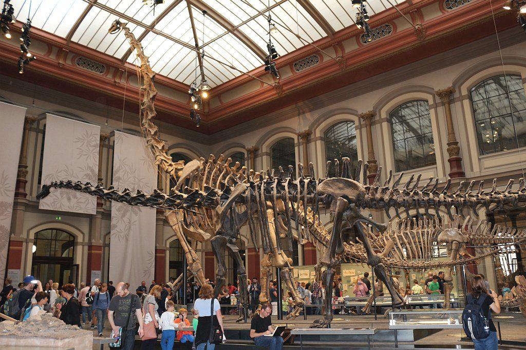 Der Große Saal mit den ausgestellten Skeletten von Dinosauriern aus dem Jura