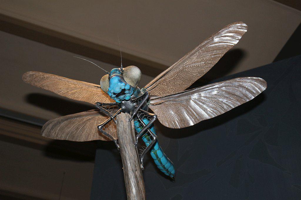 Lebensgroßes Modell einer Libelle aus dem Zeitalter des Karbons
