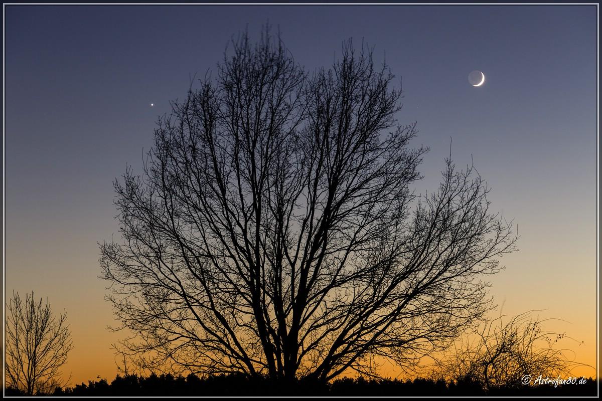Venus & Mondsichel